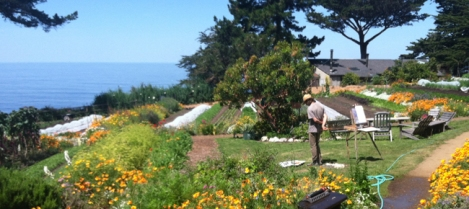 esalen-coastal-garden